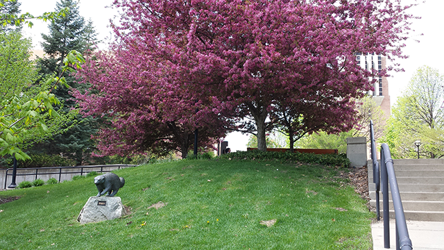 Flowering tree on North Campus.