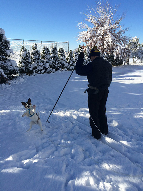 Jeff skiing with his cattle dog