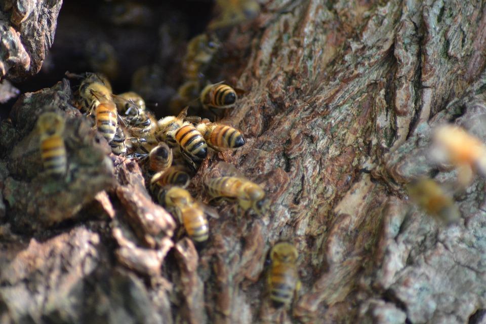 Underestimated Impacts of Urbanization on Wild Bees in Washtenaw County
