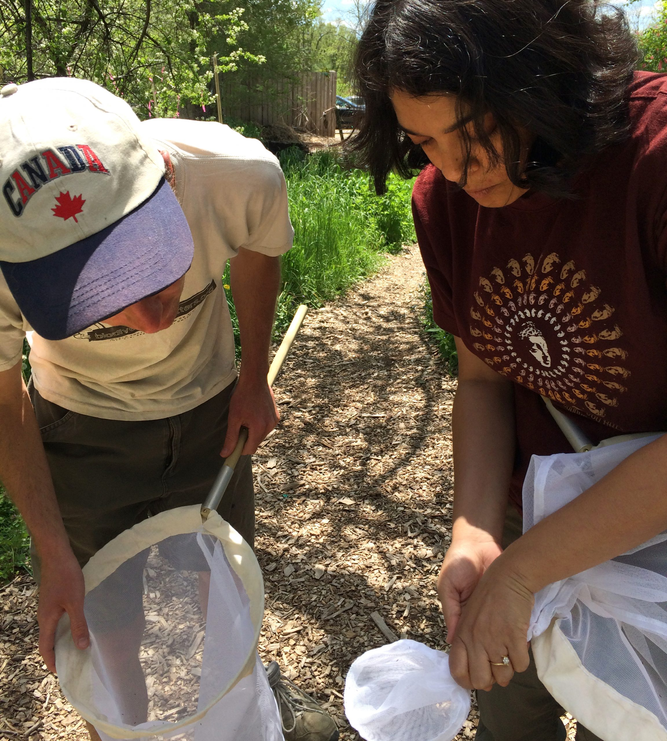 Gordon Fitch and Chatura Vaidya collect bees with nets.